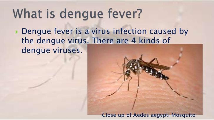 essay about malaria dengue